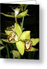 Pastel Yellow And Wine Orchids Greeting Card