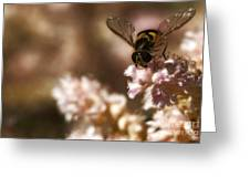 Pastels Delight Greeting Card