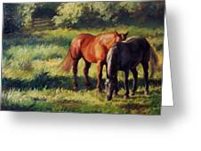 Pasture At Whites Crossing      Horse Painting Greeting Card