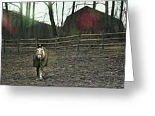 Pasture Pony Greeting Card