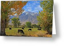 Pasture With A View Greeting Card
