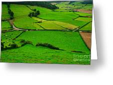 Pastures In The Azores Greeting Card