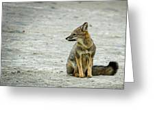 Patagonia Fox - Argentina Greeting Card
