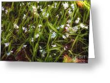 Patch Of Spring Greeting Card