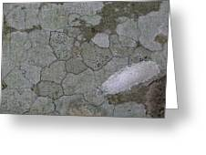 Patches Of Grey And Life Greeting Card