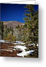 Patches Of Snow Greeting Card