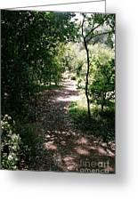 Path  Greeting Card