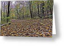 Path Home - Kettle Moraine 10-14-16 Greeting Card