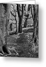 Path In Crownest Woods Greeting Card
