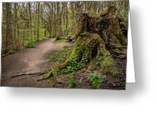 Path In Judy Woods Greeting Card