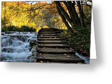 Path In Plitvice Greeting Card
