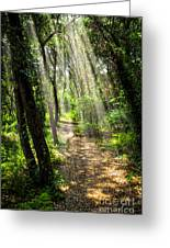 Path In Sunlit Forest Greeting Card by Elena Elisseeva