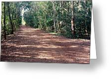 Path Into The Jungle Greeting Card