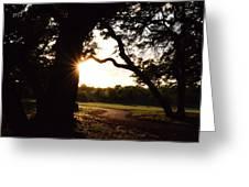 Path Into The Sun Greeting Card