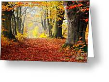 Path Of Red Leaves Towards Light In Fall Forest Greeting Card