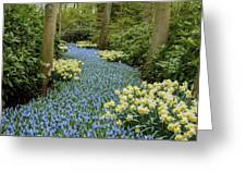 Path Of The Beautiful Spring Flowers Greeting Card