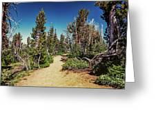 Path On Top Of Mt. Howard, Wallowa Or Greeting Card