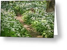 Path Through A Deciduous Forest, Wild Garlic Greeting Card