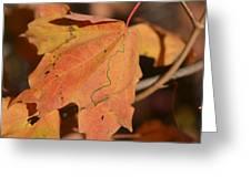 Path Through A Leaf Greeting Card