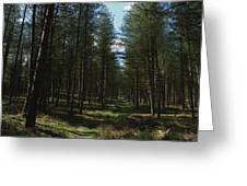 Path Through Cannock Chase Greeting Card