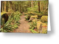 Path Through Mossy Forest Greeting Card