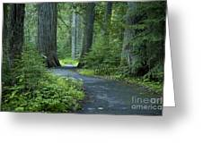 Path Through The Cedars Greeting Card