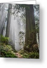Path Through The Light Greeting Card