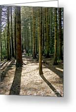 Path Through The Woods. Greeting Card