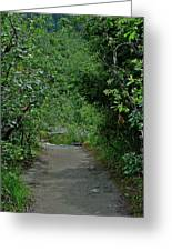 Path To Adventure Greeting Card