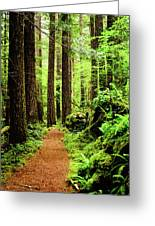 Path To Peace Greeting Card