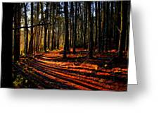 Path To Serenity - Nickerson State Park Greeting Card