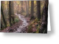 Path Trough The Woods Greeting Card