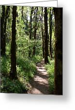 Pathway Through The Woods Greeting Card