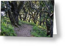 Pathways Greeting Card