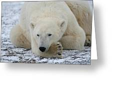 Polar Bear Patience Greeting Card