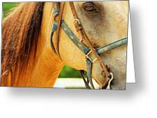 Patient Horse Greeting Card