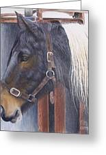 Patient Mare- Glin Fair Greeting Card