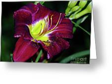 Patricia Neal Daylily Greeting Card