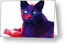 Patriotic Cat Greeting Card