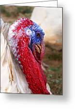 Patriotic Turkey Greeting Card