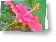 Pat's Hibiscus  Greeting Card