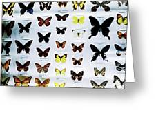 Pattern Made Out Of Many Different Butterfly Species Greeting Card