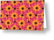 Pattern Of African Daisies Greeting Card