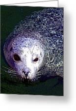 Patterned Seal Greeting Card