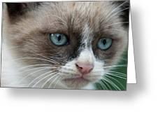 Pauls Little Cat Greeting Card
