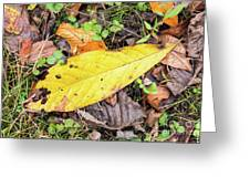 Paw Paw Leaf Fall Colors Greeting Card