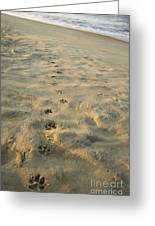 Paw Prints In The Sand Greeting Card