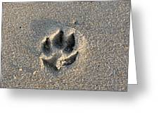 Pawprint In The Sand Greeting Card