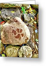 Paws On The Rocks Greeting Card