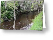 Paynes Creek Greeting Card